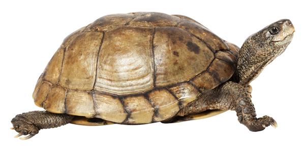 tortoise-2.png